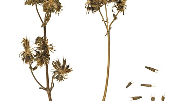 seed-dispersal-how-do-plants-spread-their-seeds