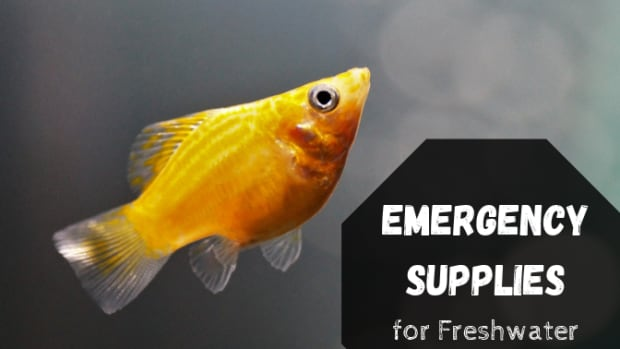 emergency-items-to-keep-for-freshwater-fish