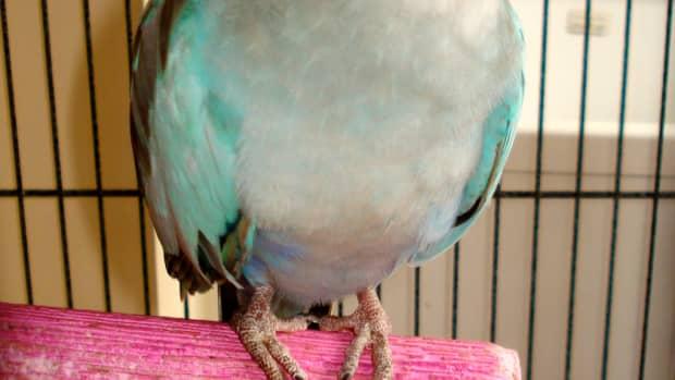the-princess-parrot