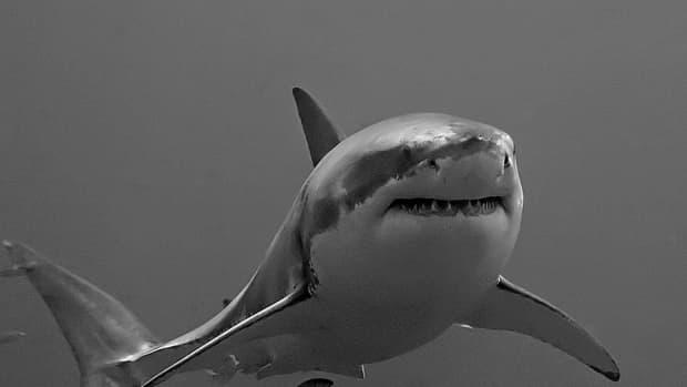 the-shark-week-2013-fake-megalodon-documentary-fiasco