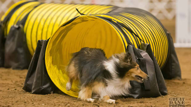 why-do-dogs-have-dew-claws-dew-claws-and-the-active-canine-competitor
