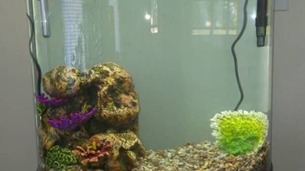 setting-up-a-freshwater-aquarium-a-guide-for-beginners