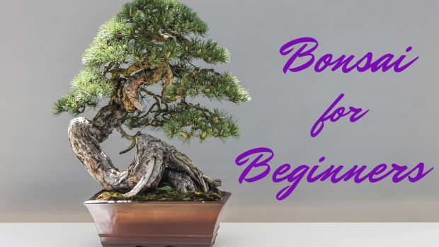 a-beginners-guide-to-bonsai