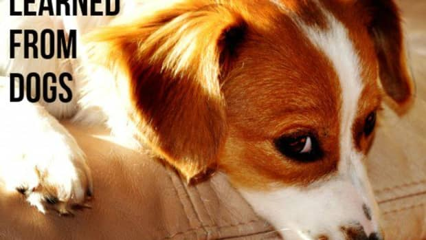 lessons-learned-from-dogs-how-to-live-your-best-life
