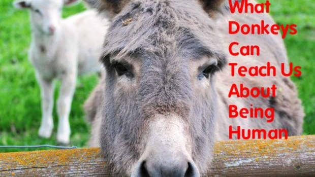 lessons-learned-from-donkeys-how-to-live-your-best-life