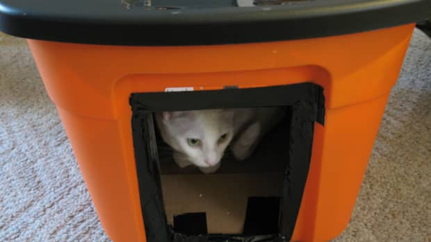 frugal-and-homemade-winter-house-for-stray-cats