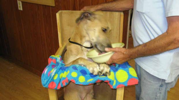 dog-health-megaesophagus