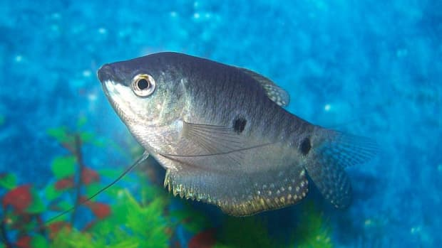 how-to-care-for-a-fish-tank-aquarium-maintenance-tips