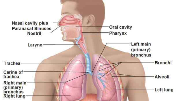pulmonary-mechanics