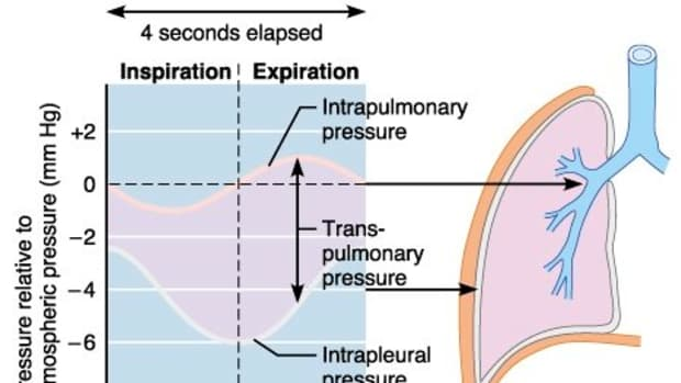 lung-pressures-and-lung-compliance