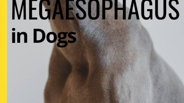dog-food-for-megaesophagus
