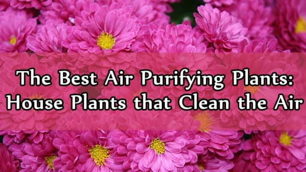 the-best-air-purifying-plants-houseplants-that-clean-the-air