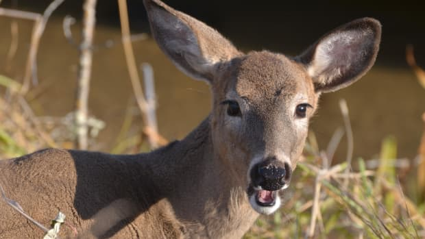 keep-deer-away-from-your-plants-and-garden-without-building-a-fence