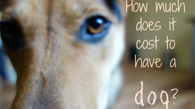 pet-care-costs-the-true-cost-of-pet-ownership