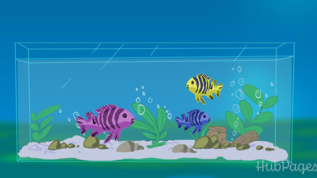 how-to-keep-your-aquarium-crystal-clear-at-all-times