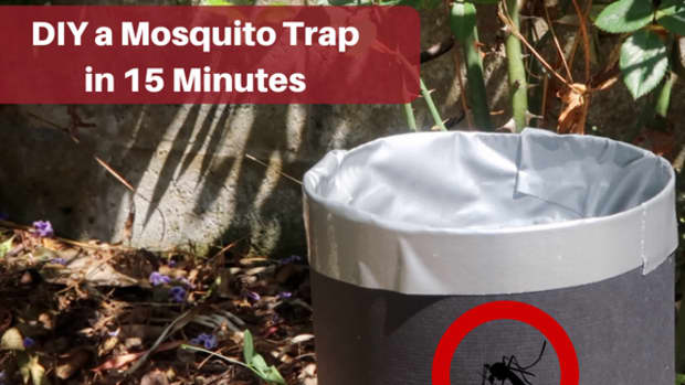 how-to-make-a-homemade-mosquito-trap-for-organic-mosquito-control