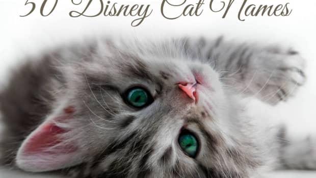 disney-cat-names