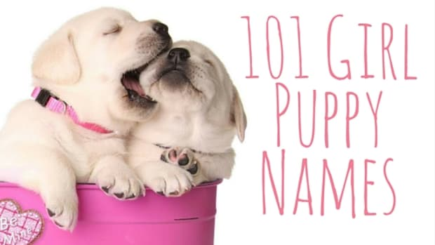 puppy-names-for-girls