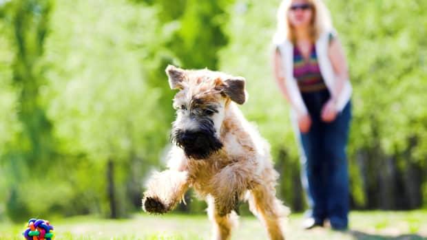 irish-dog-names