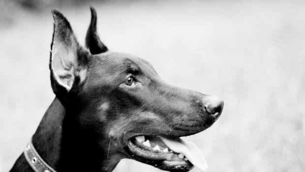 100-tough-dog-names