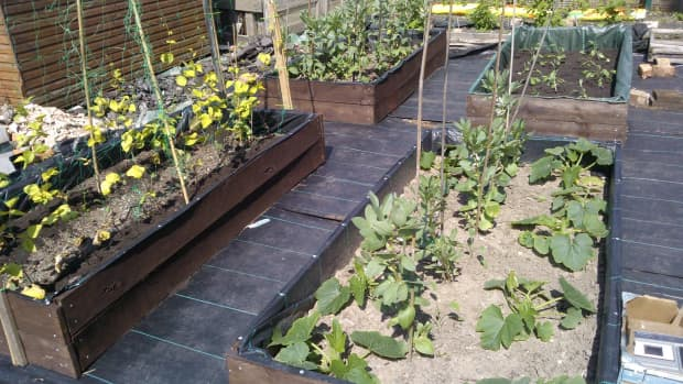 how-to-have-a-weed-free-low-maintenance-allotment