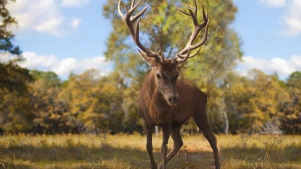 freak-deer-antlers