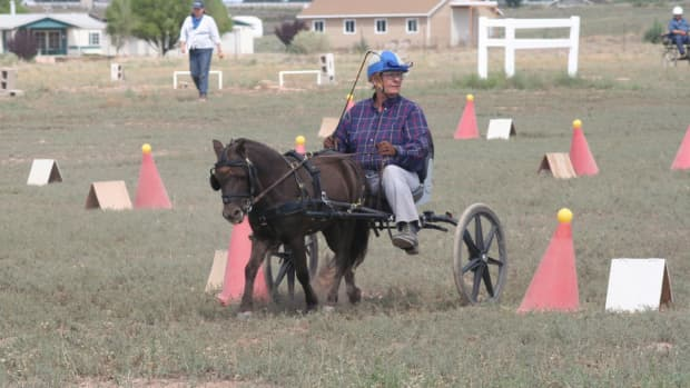 combined-driving-with-miniature-horses