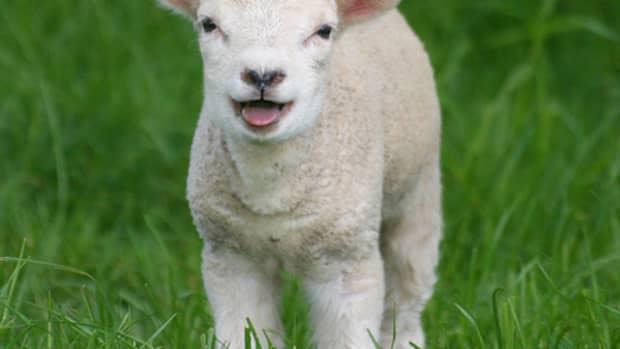 mukti-the-lamb-comes-of-age-a-short-story