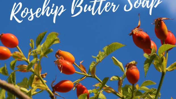 rosehip-butter-soap-for-rosacea-roh-zey-shee-skin-the-making