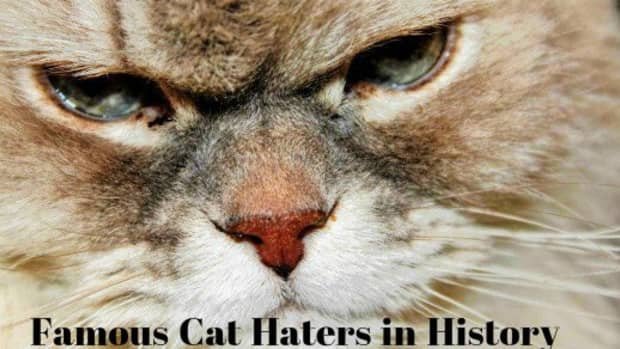 cat-haters-famous-people-in-history-who-disliked-cats