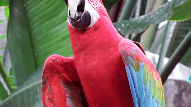 the-bloedel-conservatory-in-vancouver-a-photo-tour