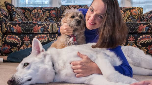 is-dysbiosis-the-root-cause-of-your-dogs-health-problems
