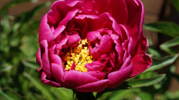 how-to-take-beautiful-flower-photographs