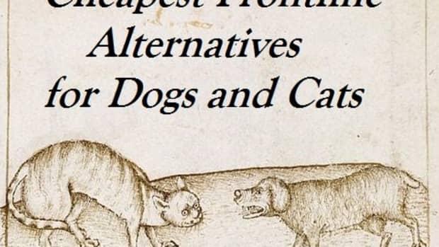 good-generic-alternatives-to-frontline-flea-medication-for-pets