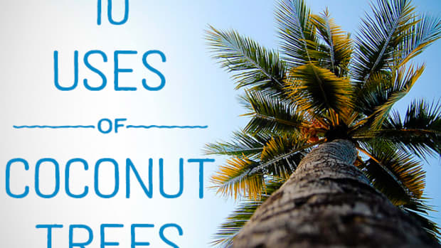 uses-of-coconut-trees