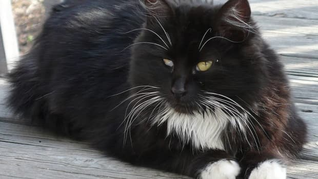 how-to-tell-if-a-stray-cat-is-healthy