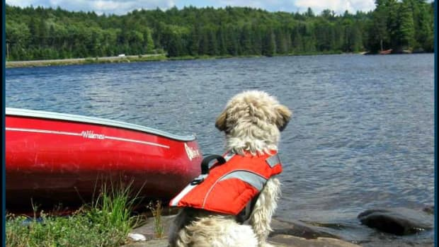 how-to-safely-canoe-with-your-dog
