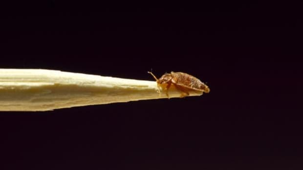 6-effective-treatments-to-get-bed-bugs-out-of-your-car
