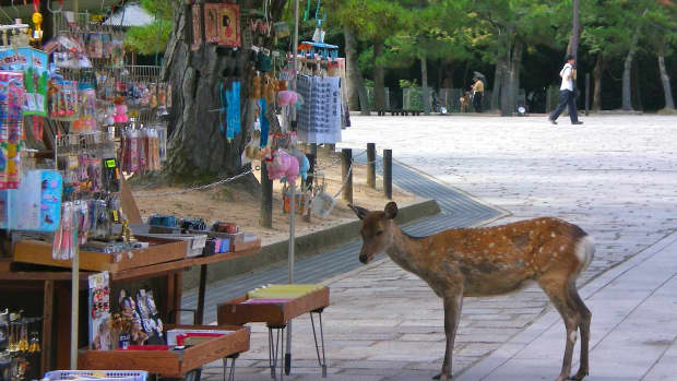 nara-park-where-deers-are-messengers-of-the-gods