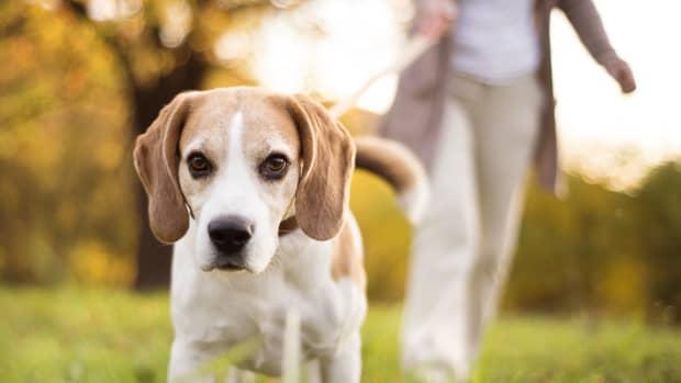 dog-walking-business-names