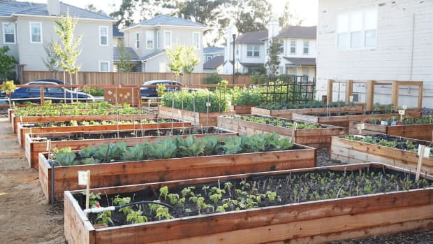 how-to-build-a-raised-garden-bed-diy-tips-plans-and-prefab