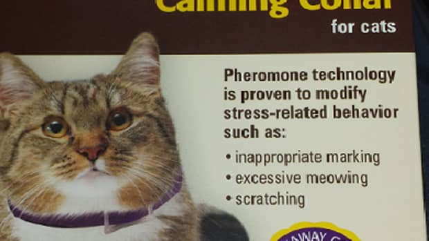 sentry-calming-collar-review-does-it-stop-cat-spraying-and-scratching
