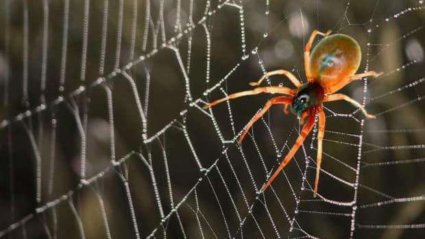 how-spiders-breathe
