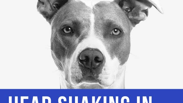 dog-shaking-head