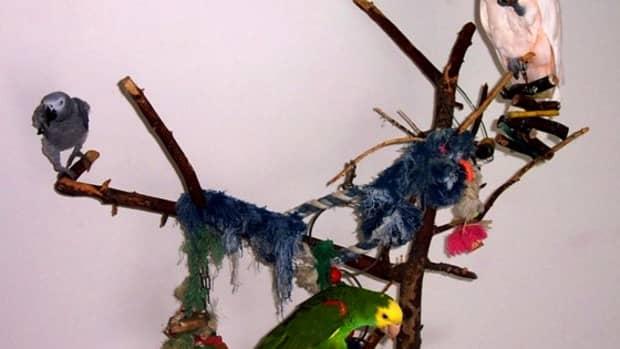 birdies-in-the-background