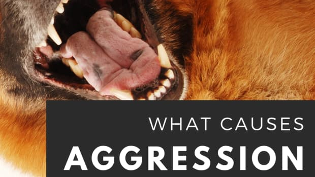 causes-of-dog-aggression