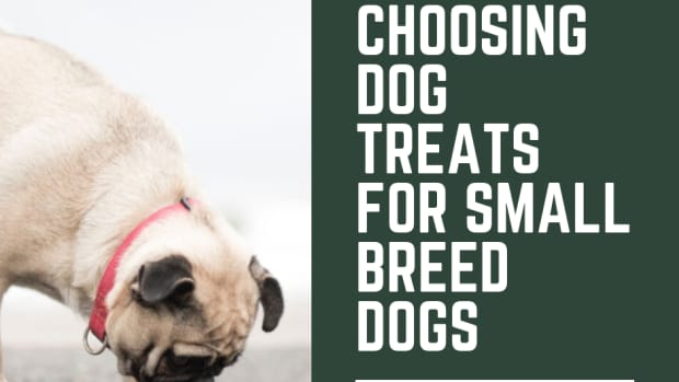 how-to-select-dog-treats-for-small-dogs
