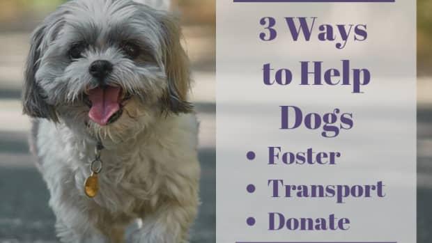 3-ways-to-fill-your-doggie-karma-bank