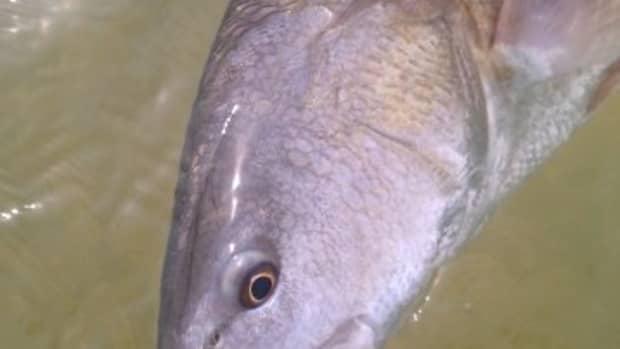fishing-for-redfish