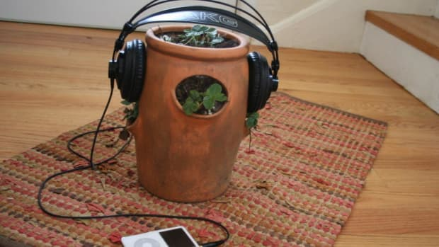 the-effect-of-music-on-plant-growth-and-pests